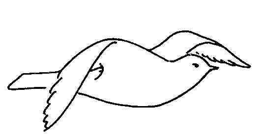 Biological Drawings Bird Flight Wing Upstroke Birds Structure