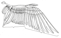 Bird Wing Structure