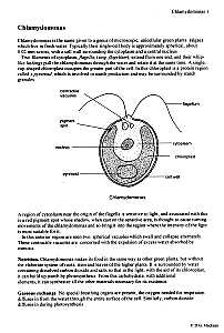 biology protista, amoeba, malaria, paramecium, spirogyraDiagram Of Clamydomonas #21