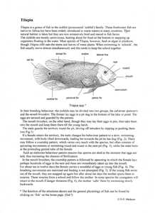 Tilapia teaching notes