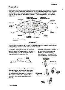 features of paramecium