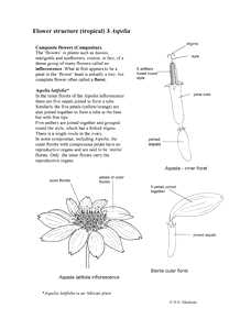 Tropical plants flower structure biology teaching notes 3 aspelia ccuart Image collections