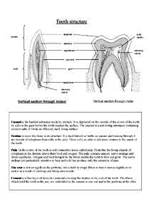 Tooth structure